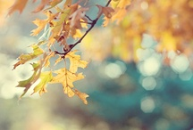 Autumn / by Jessica Holland