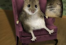 Mini Mouses & their Houses!