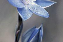 Blüten, so weit das Auge reicht