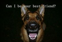 mybestie / german shepherd