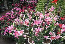 猫に良くない観葉植物 / 猫に害のある観葉植物、猫に危険な観葉植物