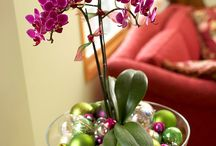 Orchids ( Plants )