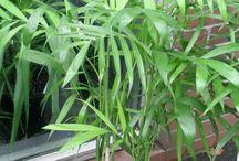 plantas de interior que absorben la humedad