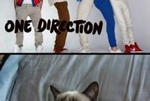 grumpy cat and one direction
