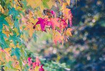 Autumn / Estação da alma!