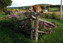 ploty,plutky