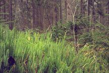 W lesie / Zdjęcia ze spacerów po lesie w Mazurskim Parku Krajobrazowym - Siedlisko na Wygonie