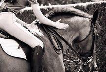 Equestrians and horses