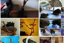 cats crafts
