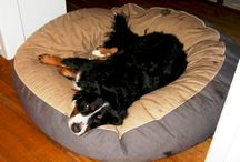 Bernese Mountain Dog / #Bernese Mountain Dogs on #bean bag beds from #Barka Parka
