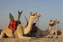 HOTELES EN MARRUECOS / Tanger, #Fez, Rabat, #Marraketch o #Casablanca, hay mucho que ver en #Marruecos, tu eliges: http://www.quierohotel.com/hoteles-marruecos.htm