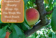 Homeschool Weekly Wrap- Up