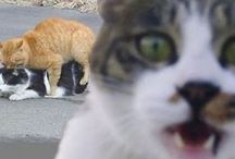 Photobombs / Cats photobombing