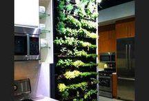 Vegetable Gardens