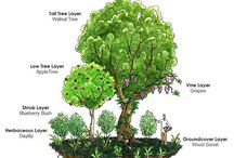 Tree Guilds