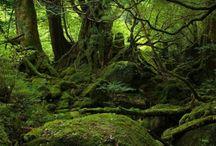 Yakushima Island / by Ann Marshall