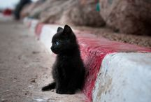 Cats / by Alyssa Mehrkam