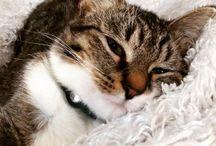 Cat Health / Cat allergies, behavior problems, flea remedies, arthritis, and more!