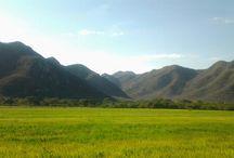 Ruta del Arroz / by Provincia Hostal Valledupar Colombia
