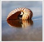 Seashells by the Seashore / by Carene Boykin