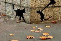 topo gatto