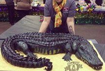 Aligator/Krokodile