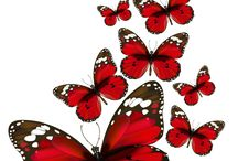 PNG.бабочки,цветы......