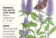 Botanical Interests - Herbs