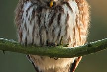 Owls / by Mindy Lenneman