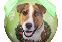 Jack Russell Terrier / Jack Russel Terrier pictures and gift ideas.
