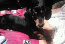 My Dog. Blacky