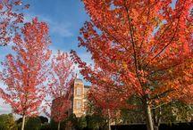 Autumn 2016 / Autumn colours