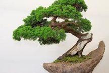 bonsai zokei
