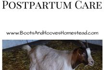 Goat Care / Goat Care and tips for the farm and Homestead. If you would like to join this board please follow me and email me at theorganicgoatlady@gmail.com