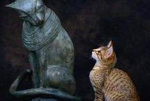 Cosa vogliono i gatti / What cats wants