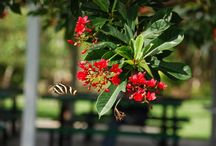 "Butterflies / Beautiful butterflies in Coconut Creek!  We are the ""Butterfly Capital of the World"". / by Coconut Creek"