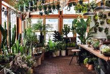 Greenhouse and glasshouses
