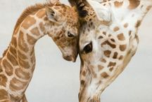 long necks and big eyes / by Mary Williams