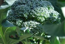 Growing Organic Vegetables in small spaces and containers etc. / organic vegetables