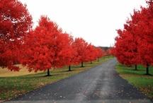 Autumn Is Bliss