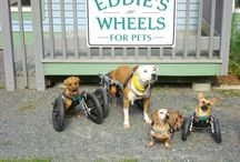 Disabled Pets Resources