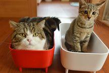 Maru, Lil' Bub and Grumpy Cat