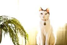 Domestic Cats from Indonesia