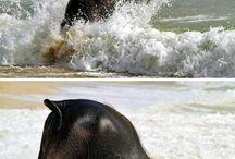 elephants. / by Ginnie Demske
