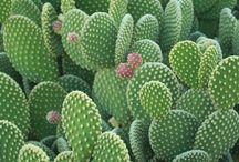 кактусы и цветы