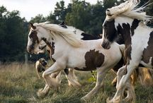 Horses / Beautiful Horses / by Treasures of the Southwest.com