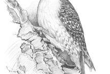 Vogels, birds