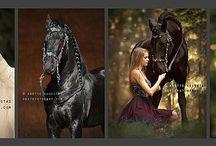 Equine Photography / www.hestefotograf.com