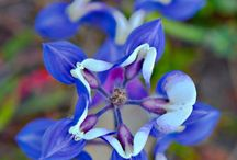 BLUE FLOWERS / by Mary Mills