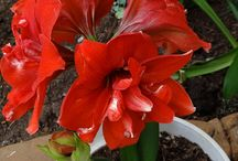 Rocío plantas  / Rocío plantas flor  / by jose alonso